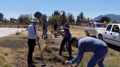 Photo of Suman esfuerzos jóvenes y gobierno para reforestación en la comunidad de Ramales