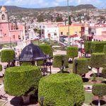Árboles se secan en Guanajuato y la solución ha sido talarlos