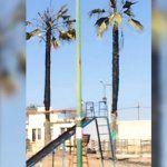 Prenden fuego a palmeras en fraccionamiento Urbi
