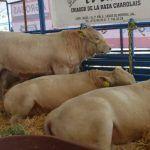Expo agropecuaria en Pénjamo