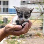 Promueven adopción de mascotas