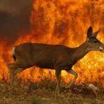 Van más de 21 mil hectáreas incendiadas en Guanajuato