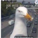 "Un par de gaviotas ""robaron cámara"" en pleno tráfico vehicular"