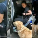 ¡Policía arresta a perrito! Se metió a refrescarse a una fuente