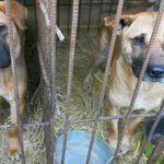 Perro enternece al Internet por su muestra de gratitud hacia la persona que lo salvó del matadero