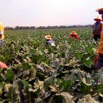 Ante amenazas de Trump, Guanajuato busca exportar a Asia