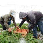 Produce Irapuato fresa de alta calidad