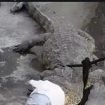 Sorprende Cocodrilo a vecinos de la Colonia Morelos