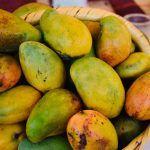 Familias de Pénjamo y la región llegan al Festival del Mango