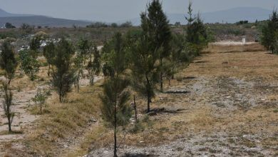 Photo of Continúa plantación de arbolado en relleno sanitario