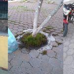 Se quejan en redes por basura de pizzería en Jardines de Irapuato