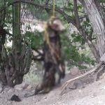Cuelgan de un árbol a perrito en Xichú