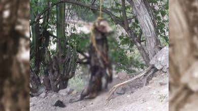Photo of Cuelgan de un árbol a perrito en Xichú