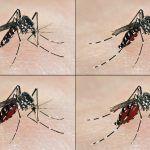 Se confirman casos de dengue tipo 2 en Silao