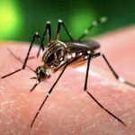 Detectan dengue más agresivo en Jalisco