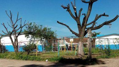 """Photo of """"Mutilan"""" árboles en Kínder de la Fonapo, denuncian ciudadanos"""
