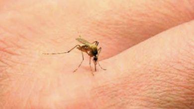 Photo of El mosquito del dengue ya se adaptó al clima de Guanajuato