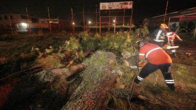 Photo of Demasiados árboles han caído en el municipio