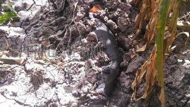 Photo of Descubren cadáver semienterrado en Abasolo