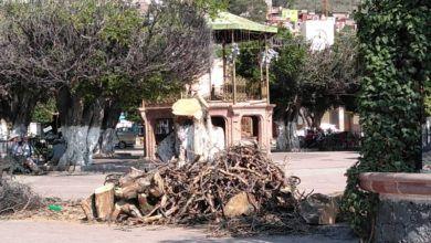 Photo of Árboles del Jardín de Huanímaro continúan muriendo
