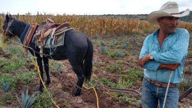 Photo of Falta de lluvia, plagas y poco trabajo: problemas del campo