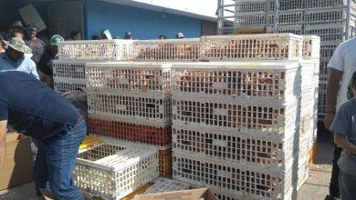 Photo of Adultos mayores reciben aves con programa «Patio productivo»