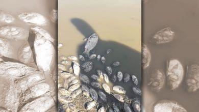 Photo of Cientos de peces muertos en embalse de Tarimoro: Ecocidio
