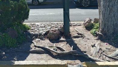 Photo of Peligrosa fractura en camellón de Díaz Ordaz