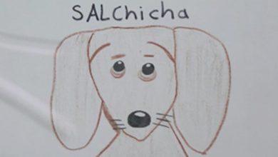 Photo of Niño dibuja carteles para encontrar a su perrita salchicha