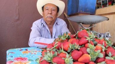 Photo of 40 años vendiendo fresas para los cueramarenses